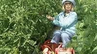 Дачные истории 1 сезон Выращиваем томаты и ирисы