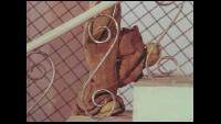Незнайка в солнечном городе Незнайка в солнечном городе Незнайка в солнечном городе. Фильм 7. Удивительные подвиги