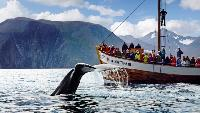 RideThePlanet Сезон-1 RideThePlanet: Norway. Lofoten Islands