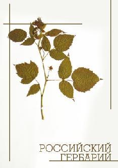 Смотреть Российский гербарий бесплатно