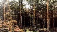 Сентиментальное путешествие на Родину. Музыка русской живописи Сезон-1 Серия 2.