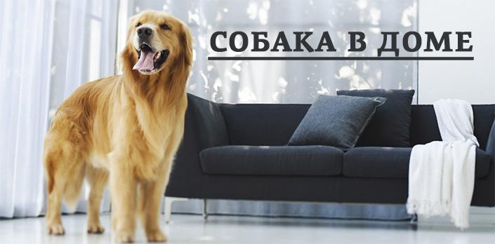 Смотреть Собака в доме бесплатно