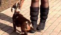Собака в доме 1 сезон 12 выпуск