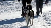 Собака в доме 1 сезон 5 выпуск